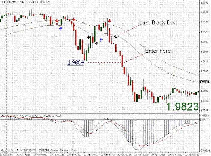 black dog trading forex system